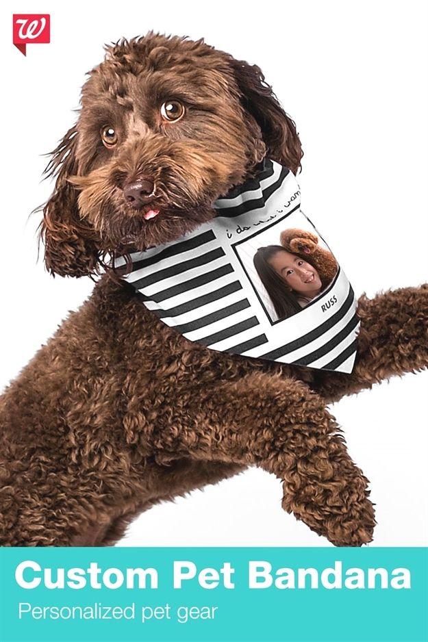 Francesca Dog Training Dixon California Dog Training Yuba City