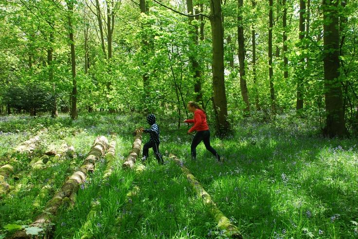 Blickling Great Wood Norfolk: Wood Norfolk