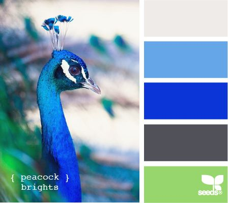 peacockWall Colors, Peacocks Bright, Bathroom Colors, Design Seeds, Design Ideas, Colors Palettes, Colors Schemes, Painting Colors, Peacocks Colors