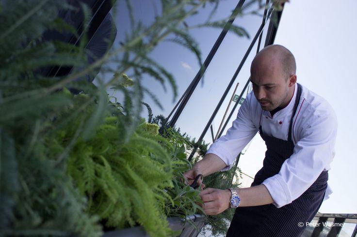 Küchenchef Dominik Münch hat einen Kräutergarten auf der Dachterrasse des IMLAUER Sky - Bar & Restaurant im 6. Stock angelegt