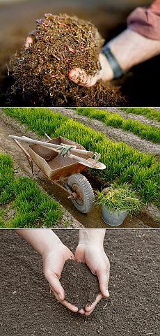Восемь способов повысить плодородие почвы