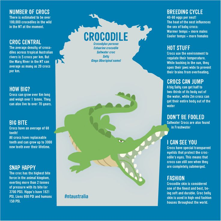 Saltwater Crocodile Facts For Kids