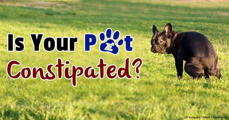 What Causes Constipation in Pets?