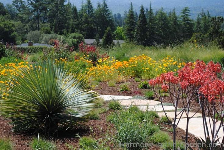 Pinterest The worlds catalog of ideas – California Native Plants for the Garden