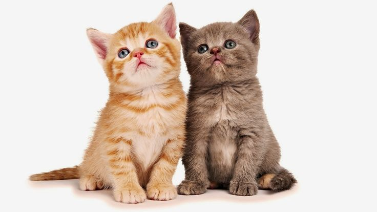katzen | ... mit zwei junge katzen als beste freunde | HD katzen hintergrundbilder