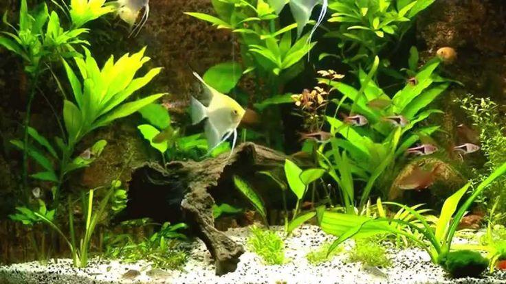Juwel trigon 190 liter aquarium - Deel 2