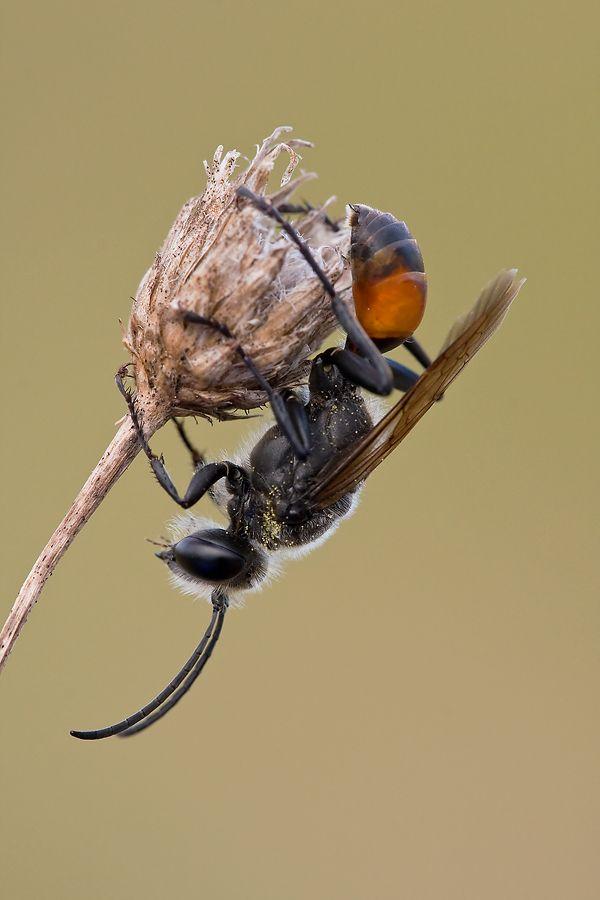 Fotografia przyrodnicza: Błonkówka