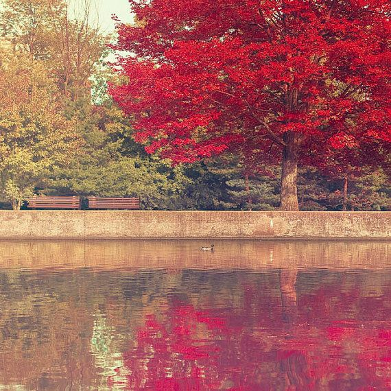tree print rideau canal ottawa canada nature photography fall tree olive green