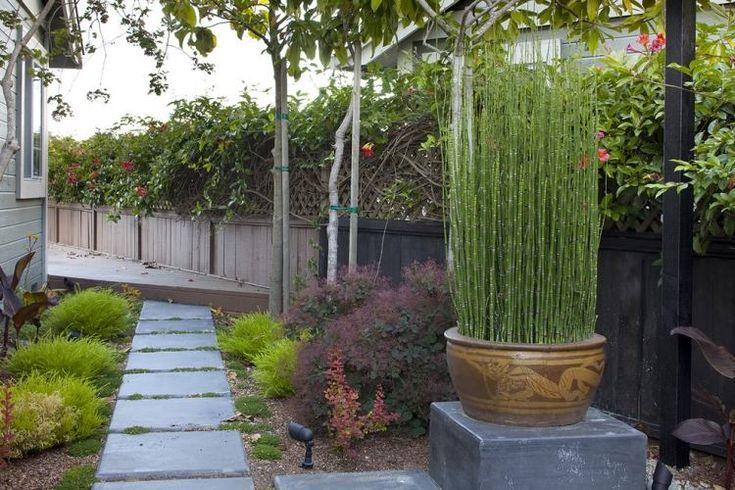 bambou en pot en argile, passage en pierre et graminées ornementales