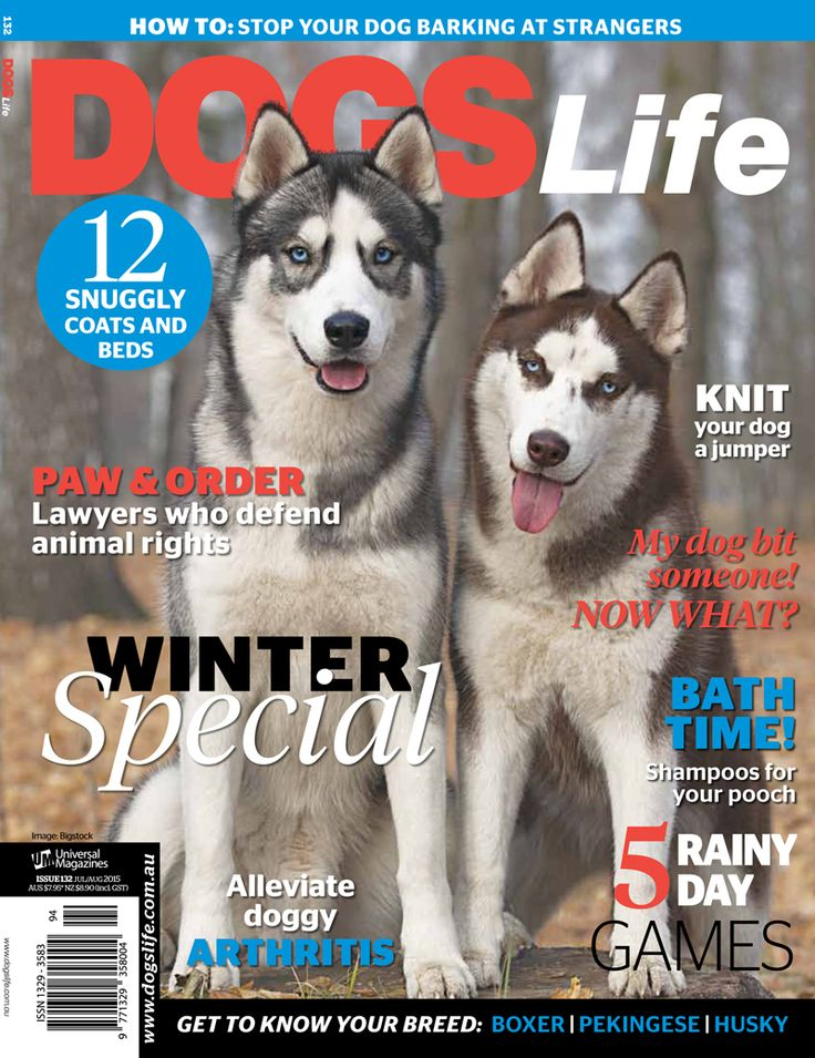 Our annual Winter special issue is on sale today! Make sure to hurry down to your local newsagent and grab yourself a copy www.universalshop.com.au #dogslifemag
