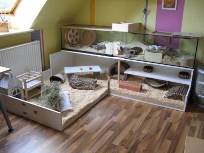 die besten 25 hamster terrarium ideen auf pinterest coole hamsterk fige hamsterk fige und gerbil. Black Bedroom Furniture Sets. Home Design Ideas