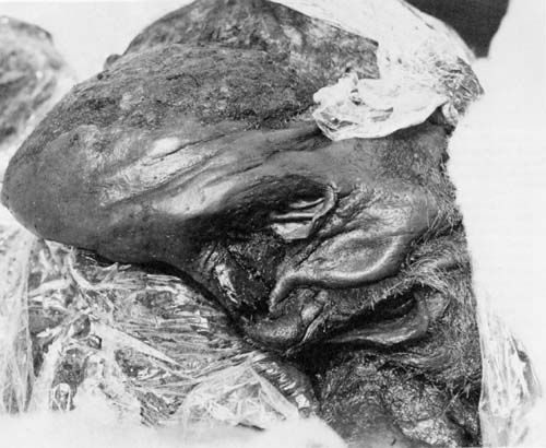 Lindow Man picture does not relate to the following article about Bog People http://www.museum.manchester.ac.uk/medialibrary/documents/respect/bog_bodies_representing_the_dead.pdf