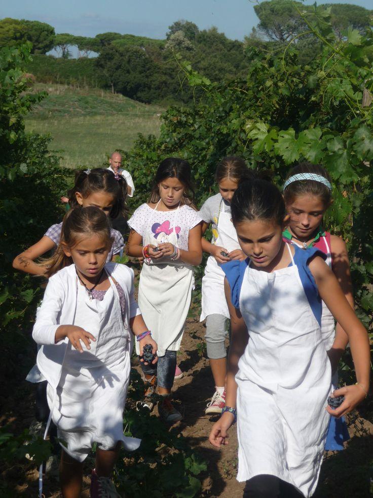 i ragazzi vanno nell'orto a prendere la verdura da cucinare