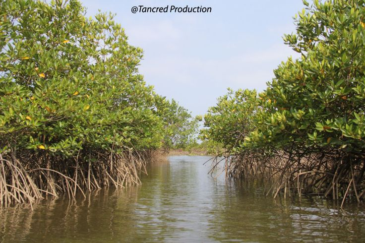 So if you had a dollar to invest in carbon futures, my strongest advice of all would be to invest in preventing mangrove loss, or even restoration. There's no magic cure to the challenges of global change – warming, rising seas, worsening storms and ocean acidification – we'll only ever get there through a combination of interventions. Mangroves aren't sufficiently widespread to tip the scales, but they give a greater return on investment than many other mitigation efforts.