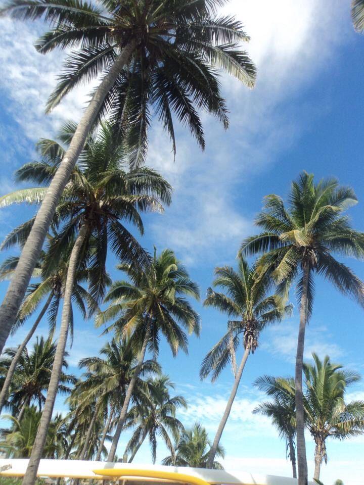 Palm Trees, Nadi, Fiji