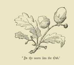 Image result for acorn drawing