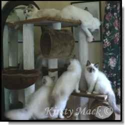 Best Cat Scratching Posts  #gifts for cats