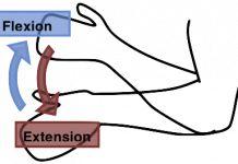 Flexión y extensión