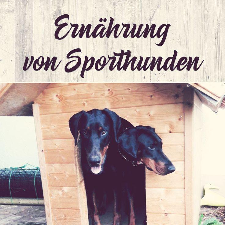 #Ernährung von #Sporthunden - ein wichtiges Thema für alle #Hunde und #Hundehalter #Hundesport #Hundetraining