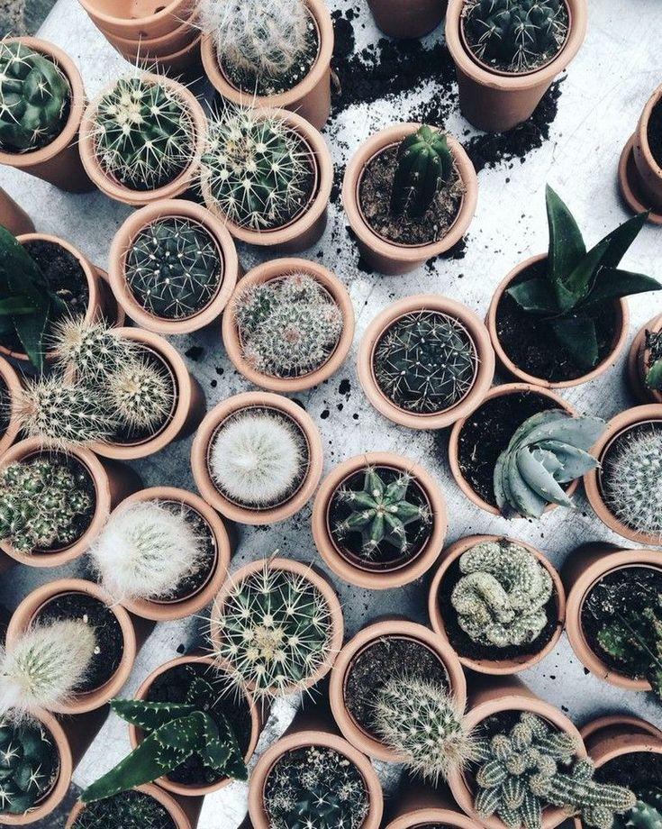25+ Beautiful Cactus Aesthetic Ideas The older lea…