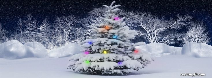 Snow Covered Tree Facebook Cover