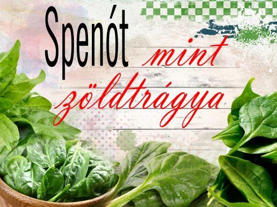 Spenót, mint zöldtrágya - gazigazito.hu