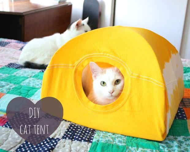 Make your own cat tent out of two wire hangers, a piece of random cardboard, and an old t-shirt.