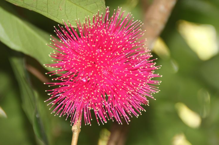 Pink is beautiful. #nature #plantation #flowers #jungle #beautiful #amazing #beauty #summer #spring #paradise #bali #island #islandofgod #travel #holiday #vacation #explorebali #hotel #resort #luxury #pink #love