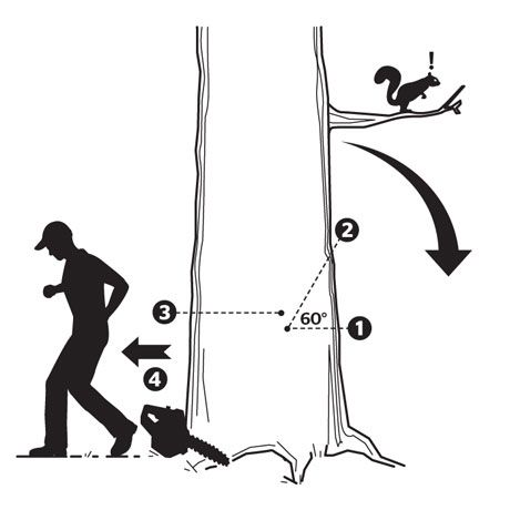 how to cut a fallen tree with a chainsaw