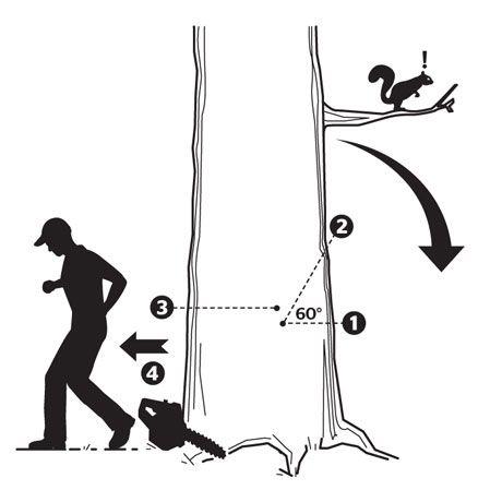 How fell a tree.