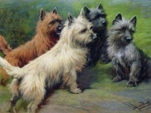 Cairn terrier de A à Z - Histoire