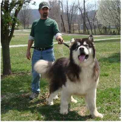 Alaskan Malamute :DD if my husband let me this would be MINE!!!