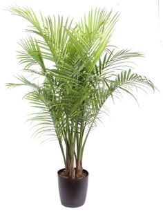 A great indoor air quality choice:  Majesty Palm.  According to the ASPCA this Majesty or Majestic Palm is Non-Toxic to Dogs!  - http://www.aspca.org/Pet-care/poison-control/Plants/majesty-palm  (When choosing indoor plants or outdoor plants, BE SURE TO AVOID the SAGO PALM = TOXIC)