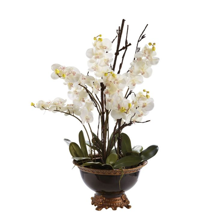 Manhattan Orchid