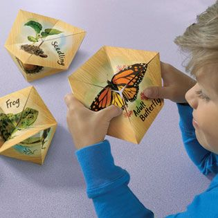 """LifeCyclers™ Butterfly, Frog and Plant - Flip your way through life cycles! A fun, hands-on way to introduce and explore life cycles, LifeCyclers provides a literal presentation of the various stages of life. Includes key life cycle stages of a butterfly, frog, and bean plant. Includes three 6""""x 6"""" finger-powered flippers (butterfly, frog, and plant) in one set, guide with information, and reproducible worksheet. Literal, visual, and kinesthetic way to teach life cycles"""