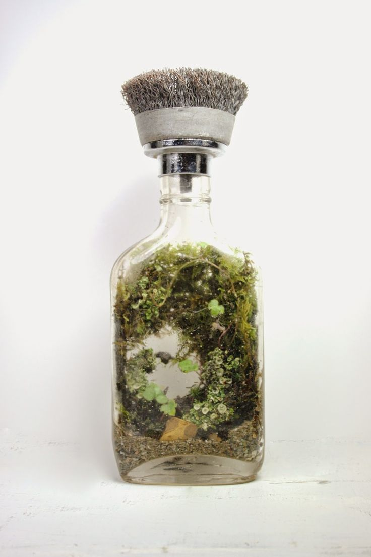 1825 Best Terrarium Ideas Images On Pinterest Terrarium