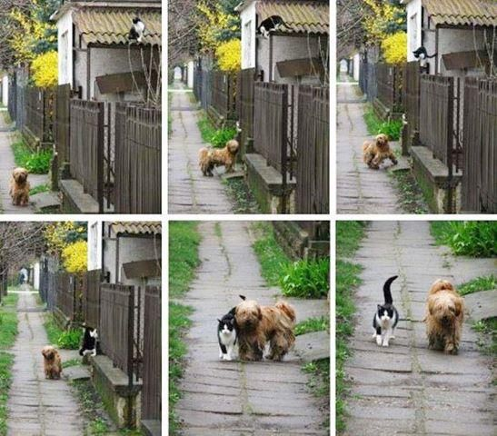 TAILS of friendship ;p