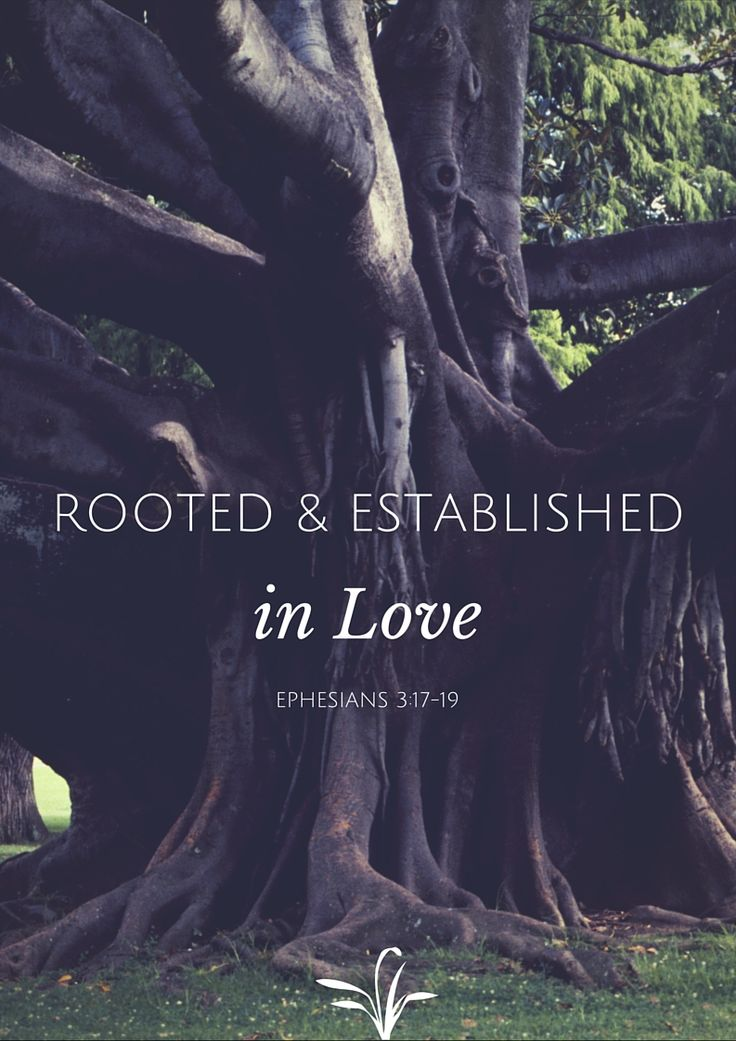 Rooted and established in love. Ephesians 3:17-19