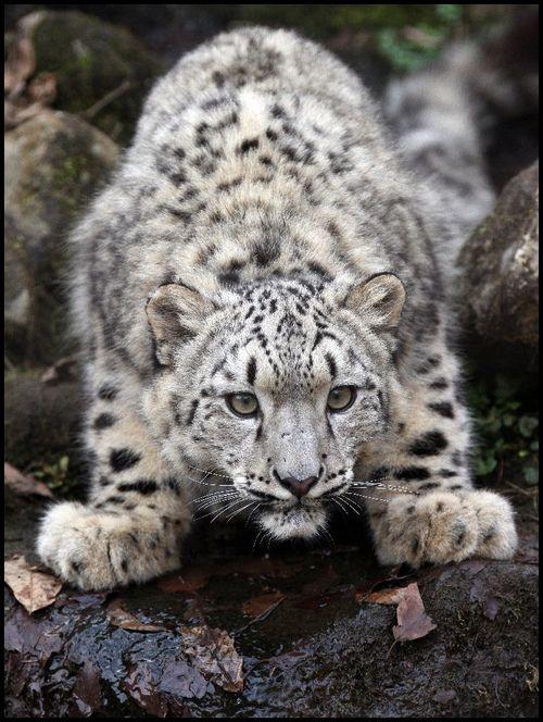 Best 25 White Leopard Ideas On Pinterest Green Cardigan