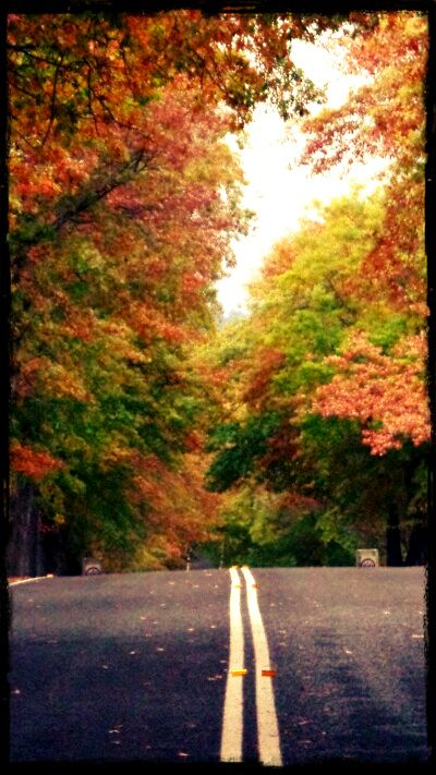 Autumn Colours - Bruxner Highway, Tenterfield.