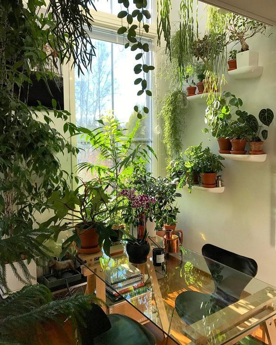 - House Plants - Garden room of house plants. Garden room of house plants. Room With Plants, House Plants Decor, Office With Plants, Small Indoor Plants, Indoor Plant Decor, Outdoor Plants, Decoration Plante, Plant Aesthetic, Glass Desk