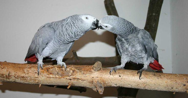 Züchter oder Tierzentren wie beispielsweise der Papageienpark Bochum bieten auf der Suche nach einem geeigneten Partner Hilfestellung