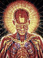 A harmadik szem megnyitása közvetlenül kapcsolódik a hatodik, pszichés csakrához, mely a szemöldök felett, a homlok közepén található, és szorosan összekapcsolódik a tobozmiriggyel. A tobozmirigy - ha csukva van a harmadik szem - szőlőszem méretű a legtöbb embernél. A tobozmirigy az a hely, ahol a lélek lakik és ahol az...