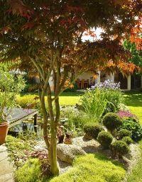 Červenolistý javor zapěstovaný jako vícekmenný stromek v blízkosti okrasného jezírka, v průhledu pak otevřený zahradní přístřešek.