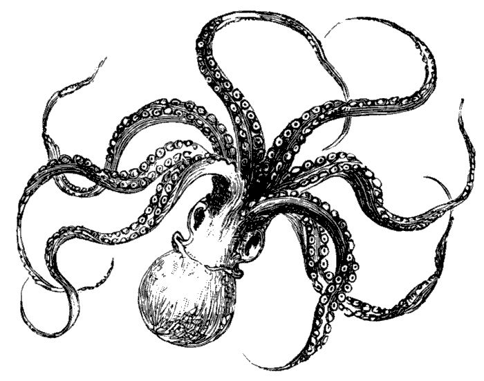 octopus:)