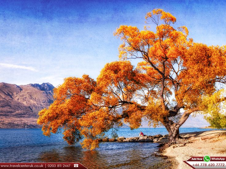 😍 Beautiful Willow tree 🌱 at lake Wakatipu ;  🗻 South Island , New Zealand    |   📝 Lake Wakatipu is an inland lake in the South Island of New Zealand. It is in the southwest corner of the Otago Region, near its boundary with #Southland.   |   🔎 Source - https://en.wikipedia.org/wiki/Lake_Wakatipu    |    🚅 Fly with the best travel agents in London ;  ➡ http://www.travelcenteruk.co.uk/  ☎ Call us Now 0203 811 2447  📱 Add Now WhatsApp +44 778 620 7772