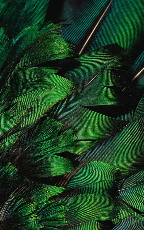 Metallic green feathers.