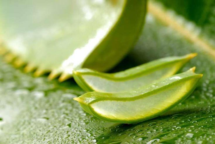 Αλόη: Όλες οι θεραπευτικές ιδιότητες, χρήσεις και οφέλη για την υγεία σε ένα άρθρο