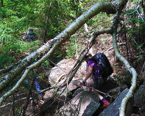 Sentier scabreux vers le mont Webster Crédit photo M.G. Guiomar
