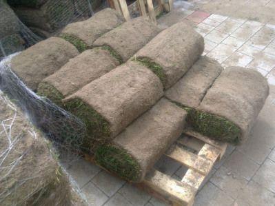 Trawnik z rolki jest alternatywą szybkiego zagospodarowania terenów zielonych. Po dokładnym przygotowaniu podłoża, miejsc na których trawa ma rosnąć układana jest trawa z rolki w ciągu paru godzin. Już na drugi dzień można się cieszyć zielonym dywanem w ogrodzie.